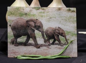 Elephants Glass Chopping Board Large Size Toughened Glass